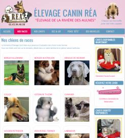 Élevage Canin Réa - Site réalisé par Wen-open